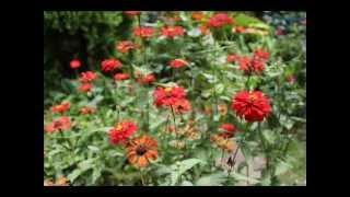Video Rathu Pata Mal - Indrani Wijebandara MP3, 3GP, MP4, WEBM, AVI, FLV November 2017
