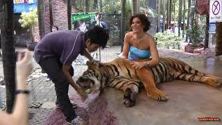 Thailand - Part 4/15 - Nongnooch Garden,Pattaya - Travel Video HD-Omnia Turism