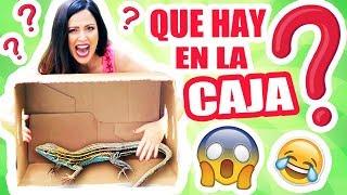 Video QUE HAY EN LA CAJA?! EXTREMO! Reto SandraCiresArt Challenge MP3, 3GP, MP4, WEBM, AVI, FLV Juli 2018