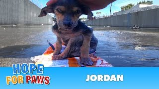Download Youtube: A brave little dog gets rescued from the river. His recovery with Hope For Paws will inspire you.