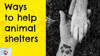 Ways to help animal shelters by The Orphan Pet