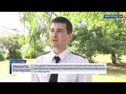 О контроле специалистами Россельхознадзора производства мясных полуфабрикатов в Волгоградской области