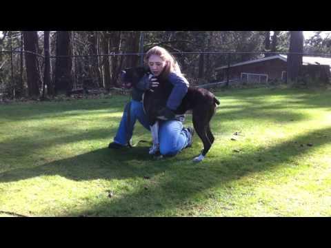 cane salvato dall'addestratore dopo un infarto. emozione incredibile!