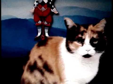 die tanzende Katze