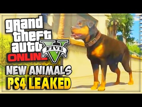 info - GTA 5 Online & GTA 5 PS4 Leaked PS4 Info Animals/New Content GTA 5 Online & GTA 5 PS4 Improved City