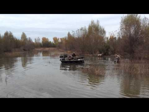 Colusa Duck hunt with my son