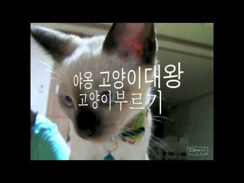 Video of 고양이 대왕
