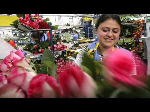 Kolumbien: Blumen für die Welt - Valentinstag sorgt ...