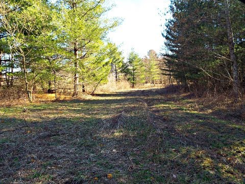 800 Acres of Hunting Land for Sale in Bishop Virginia