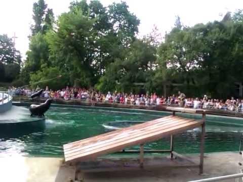 Budapesti állatkert Fóka Show 2012.Május 1