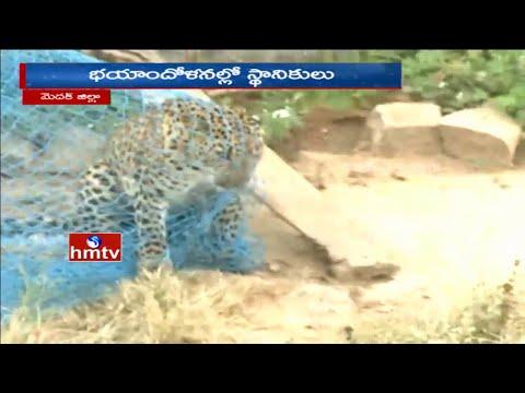 Cheetah Attacks On Villagers  5 Injured | Panic Medak People | HMTV 01 December 2015 02 26 PM