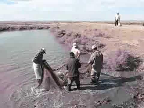 ловля сазана на острове табун арал в 2016 году