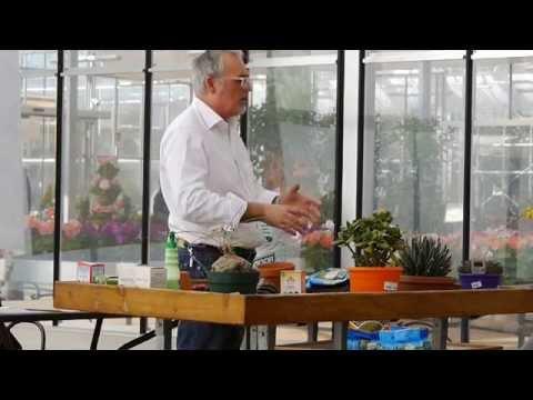il terriccio per le piante grasse