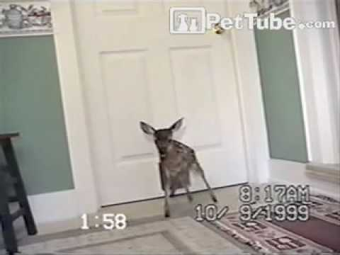 pettube - Was this door meant for the cat or the deer?