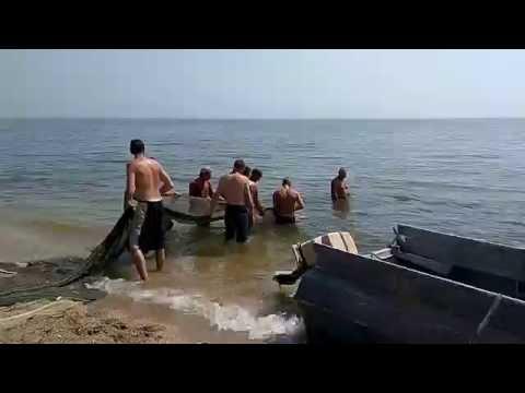 бычок на азовском море видео