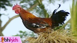 Ca khúc nhạc thiếu nhi vui nhộn hay nhất dành cho bé yêu - liên khúc con gà trống gáy ò ó o. Nhạc thiếu nhi với hình ảnh con vật...