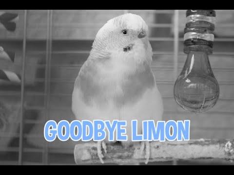 Goodbye Limon...