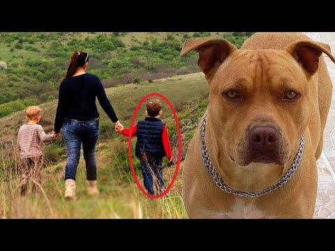 Este cão pulou em uma criança, mas quando os policias descobriram o motivo ficaram emocionados