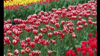 春爛漫、満開の花が咲き誇るハウステンボス
