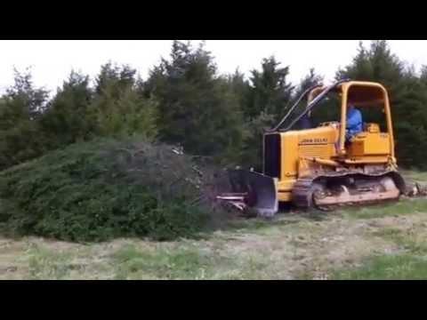 Clearing Cedar Trees
