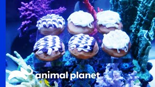 This Donut Fish Tank Looks Good Enough To Eat! | Tanked by Animal Planet