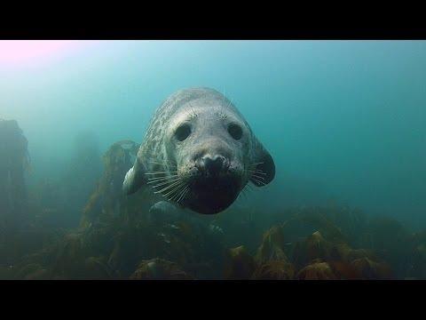 Harbor Seal Cute