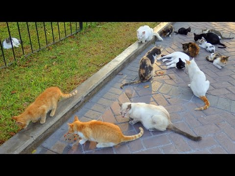 VIDEO: Feeding Cats in Lima