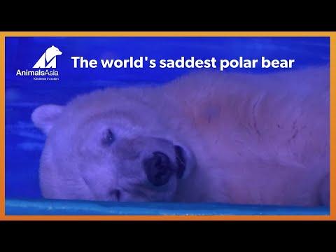 Polar bear kept isolated in a tiny enclosure inside a MALL
