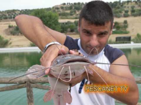 Pesce Gatto Come Si Pesca E Le Caratteristiche Principali