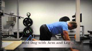 Exercise Index: Bird Dog with Arm and Leg