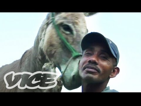 Tijuana Donkey Show - Having sex with donkeys is a part of growing up for some of the local boys on the northern coast of Colombia. We went to investigate this obscure tradition a...