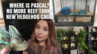 Moving Updates! Is Pascal Gone? No More reef? New Hedgehog Cage + More! by Emma Lynne Sampson