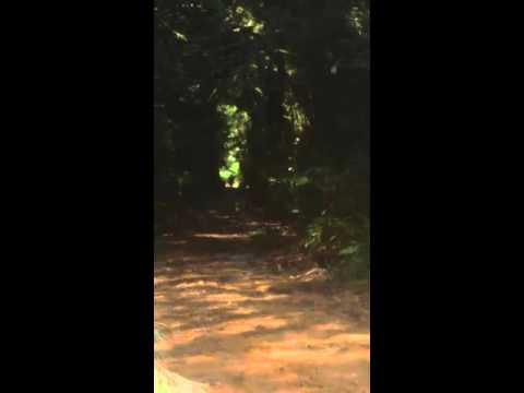 Parte 2 mostrando as trilhas em Trombudo Central