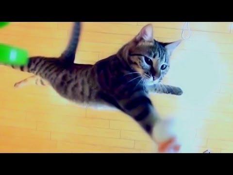 主人將玩具老鼠掛在196公分的高度看看愛貓能否跳到那麼高,結果牠的表現連主人都看到愣住了!