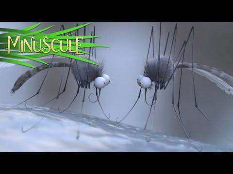 Minuscule - Season 2 (30 minutes Compilation) #5 (видео)