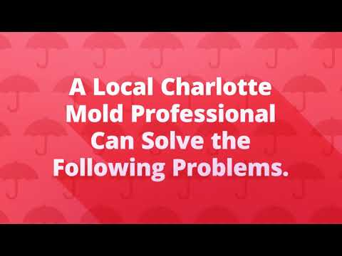 Mold Testing & Inspection Charlotte - Mold Removal & Remediation
