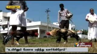 Allow Roosters fight: Perambalur people request