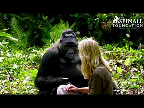 Man and his wife get accepted by Wild Gorillas