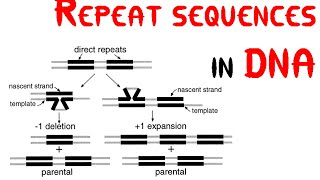 Repeat sequences in DNA