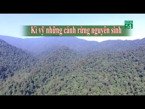 Kì vĩ những cánh rừng nguyên sinh| VTC14