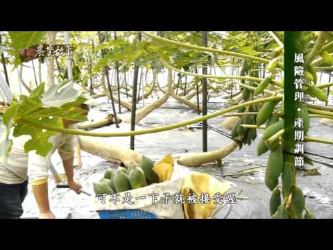 農業故事館-木瓜