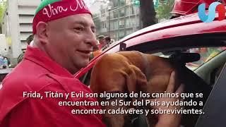 Perros rescatistas se ganan el cariño de mexicanos
