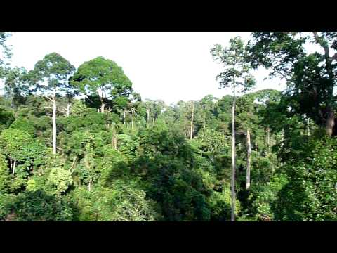 0 Passeando por entre as árvores na Malásia