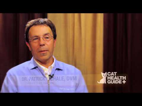 Cat Urinary Tract Infection Treatment Advice from Patrick McHale DVM