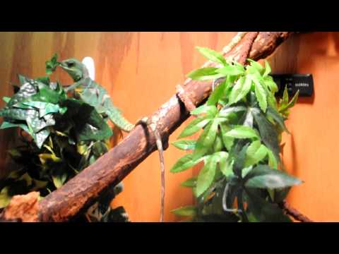 how to cure mbd in chinese water dragons