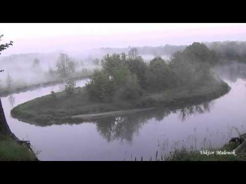 Река утро туман над водой пение птиц природа обрыв красивый вид