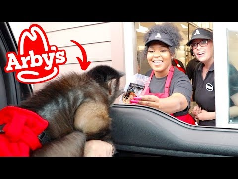 Monkey Visits ARBY'S Drive Thru!