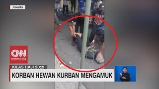 Video Lima Gigi Patah & Dada Memar, Tukang Jagal Ditendang Sapi Kurban Kondisinya Mulai Pulih MP3, 3GP, MP4, WEBM, AVI, FLV Agustus 2019