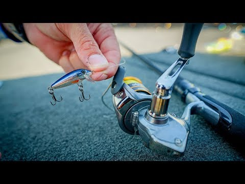 Video Fishing with Micro Lures to Stock Fish Tank download in MP3, 3GP, MP4, WEBM, AVI, FLV January 2017