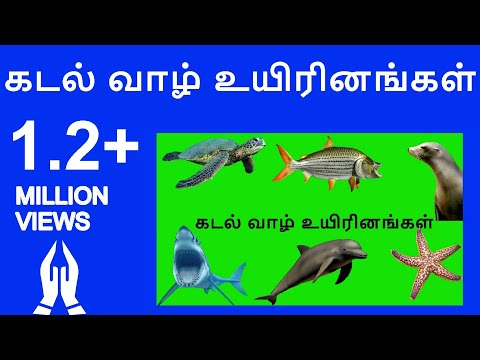 Learn Tamil Videos Tamil sea animals names video